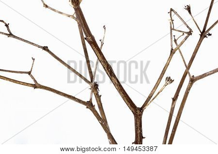 Close Up  Shot Of Twig Of Dry Dead Plant