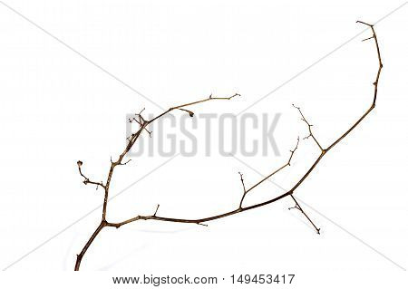 Left Side Shot Of Twig Of Dry Dead Plant