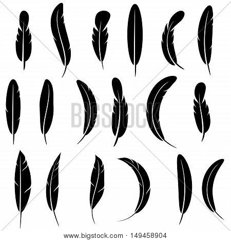 Feather Silhouette Collection Isolated on White Background