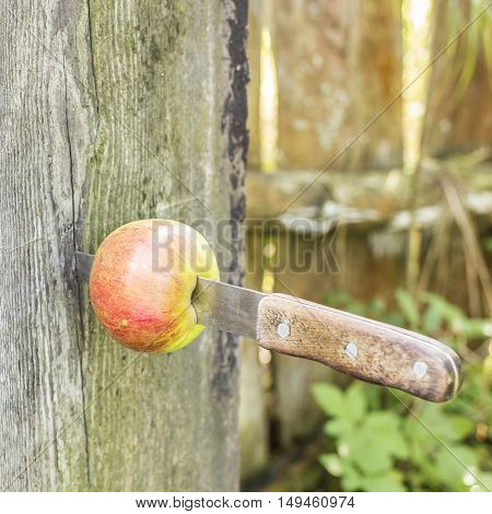 Knife stuck a in a fresh apple and inserted into old log in the garden outdoors