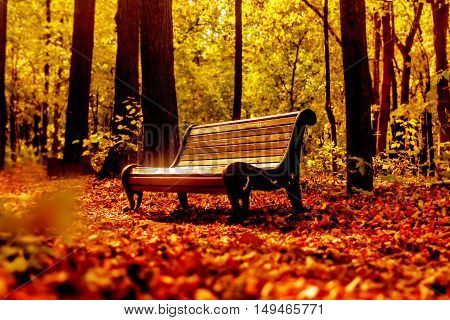 Nice wooden bench in autumn sunny gold park