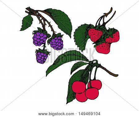 Branches of blackberries strawberries cherries seamless pattern berry background. Painted fruit graphic art cartoon. For the design of the fabric print wallpaper wrapping. Vector illustration