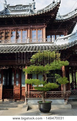 Beautiful chinese garden with tree in pot and old building at sunny day