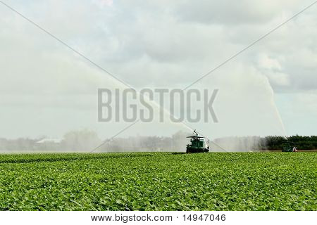 Irrigation Farm Land - 3