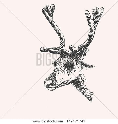 Reindeer head with big horns, Vector sketch, Hand drawn illustration