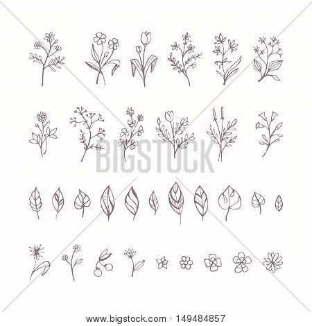 Hand drawn plants flowers and leaves set on white background