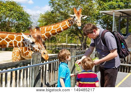 Two little kids boys and father watching and feeding giraffe in zoo. Happy children, family having fun with animals safari park on warm summer day.