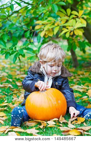 Little toddler kid boy with big orange pumpkin in autumn garden. cute child in fashion clothes having fun with huge vegetable. Traditional thanksgiving or halloween