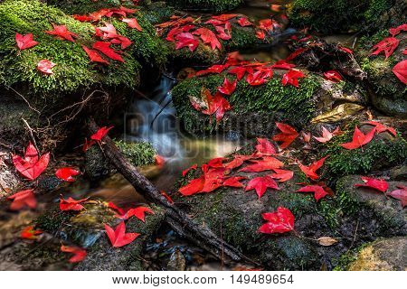 Small waterfall and colorful maple leaf with mossy rock.