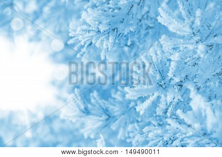 Winter background. Conifer branches covered with frost.