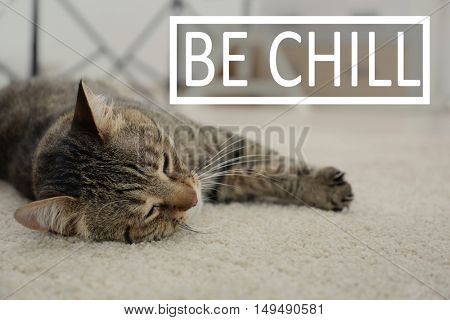 Cute cat lying on carpet at home. Text BE CHILL on blurred background.