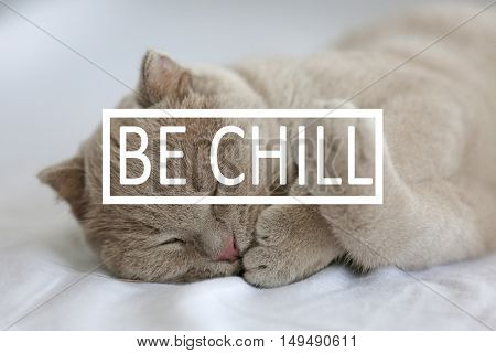 Text BE CHILL and cute sleeping kitten on background.
