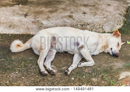 Lonely Homeless Dog Sleeping
