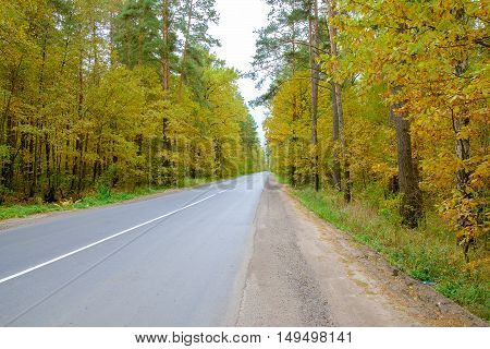 The beautiful autumn forest with road. The road in autumn forest