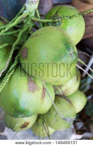 green coconut tropical fruit, healthy nature food