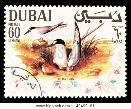 DUBAI - CIRCA 1968 : Cancelled postage stamp printed by Dubai, that shows Little Tern.