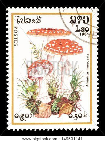 LAOS - CIRCA 1985 : Cancelled postage stamp printed by Laos, that shows Amanita Muscaria mushroom.