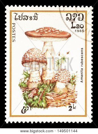 LAOS - CIRCA 1985 : Cancelled postage stamp printed by Laos, that shows Amanita Rubescens mushroom.