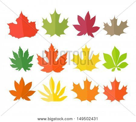 Different color leaves vector collection. Leaves isolated on white