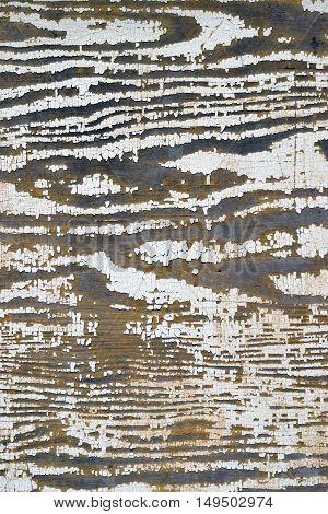 Peeling grungy white paint on wood texture