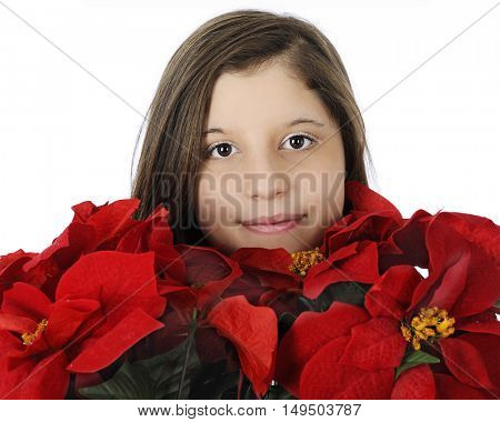 Close-up of a pretty young teen surrounded by red poinsettias.  On a white background.
