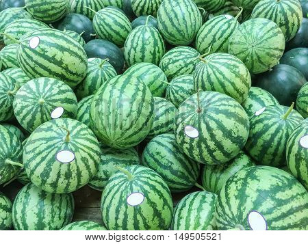 Closeup group of fresh watermelon on wood shelf for sell background