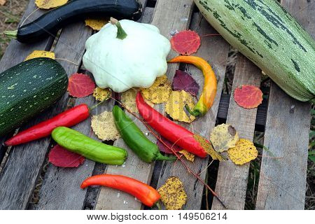 Autumn still-life with ripe vegetables. Hot pepper,  squash, squash, zucchini top view closeup