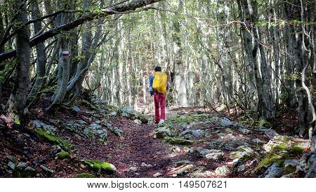 Boy runs along a footpath in the beech forest. He has a yellow backpack on his shoulders and holding two walking sticks.