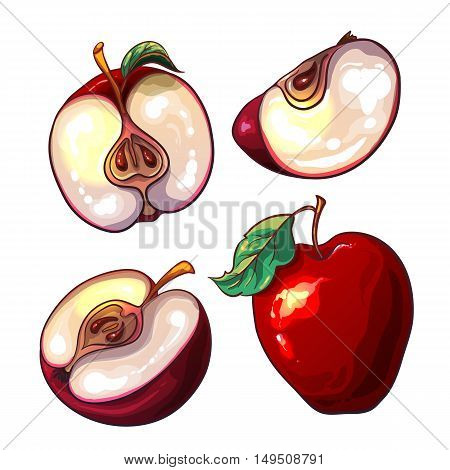 Set with red fresh apples and pieces of apples. The red apple isolated on a white background. Bright summer fruit. Vector illustration