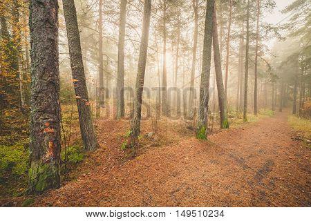 Foggy morning sun light forest nature landscape