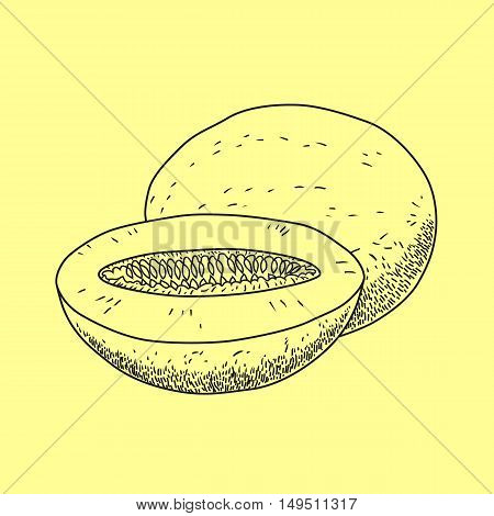 Vector hand drawn isolated melon. Organic food doodle vector illustrations isolated on beige background.