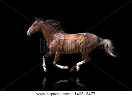 Red galloping horse isolated on black background