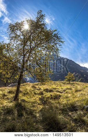 tree on a green slope, the sun, the nature, a mountain landscape
