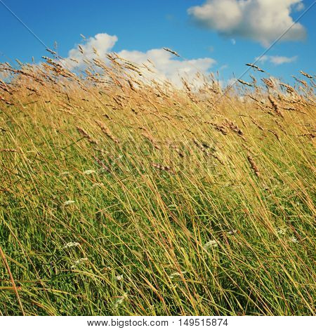 Kenozersky National Park. Meadow and Grassland. Blue sky. Russian North countryside. Aged photo. Copy space for text. Sunny summer day. Russia.