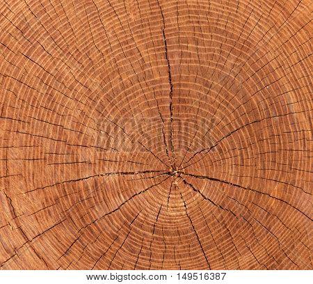 cross-sectional cut of tree