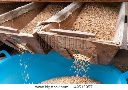 Wheat Seed Production