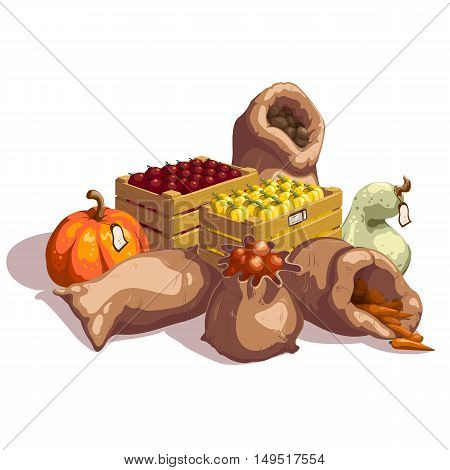 Fresh vegetables at farmers market design with tomatoes and sweet peppers pumpkin and onion vector illustration