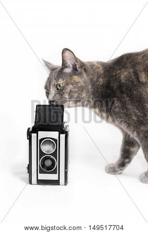 Curious inquisitive cat smelling a vintage camera