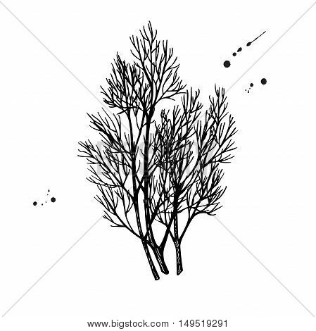 Dill bunch vector hand drawn illustration. Isolated spice object. Engraved style seasoning. Detailed organic product sketch. Cooking flavor ingredient. Great for label, sign, icon
