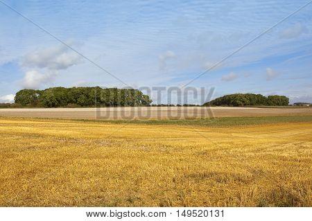 Autumn Harvest And Copse