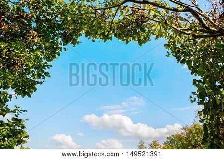 Frame From Common Hornbeam Hedge