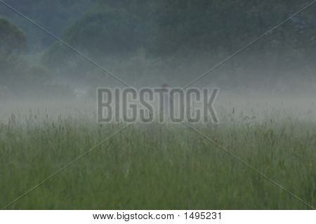 The Girl In A Fog