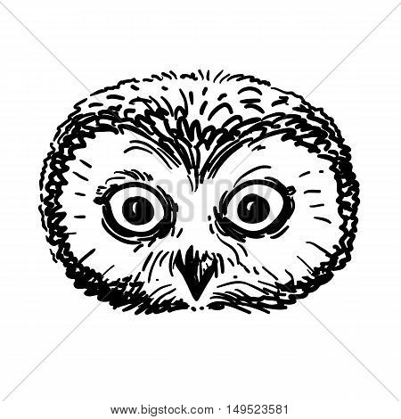 Vector hand drawn black and white illustration of an owl portrait. Retro vintage sketch style realistic owl face pen and ink drawing. Nature woodland animal bird themed design element.