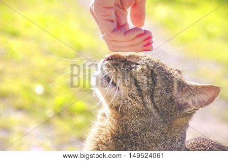 female hand is stroking the cat head