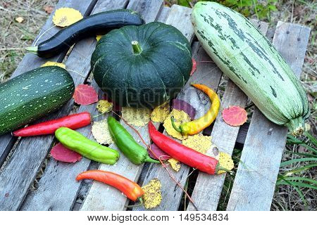 Autumn still-life with ripe vegetables. Hot pepper,  pumpkin, squash, zucchini top view closeup