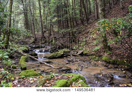 A Small Forested Trout Stream in Pennsylvania.
