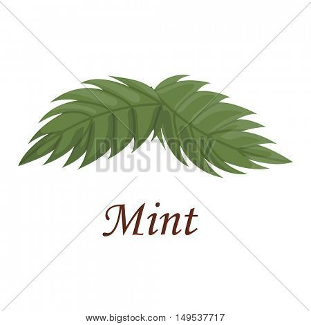 Fresh raw mint leaves vector illustration.