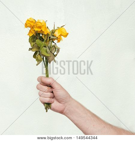 Man's hand with dead bouquet of yellow roses.
