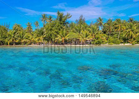 Tropical beach with palm trees and blue lagoon on sunny day. Bora Bora French Polynesia.