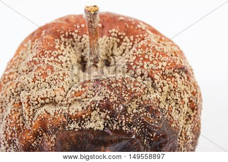 Closeup Of Old Wrinkled Moldy Apple On White Background